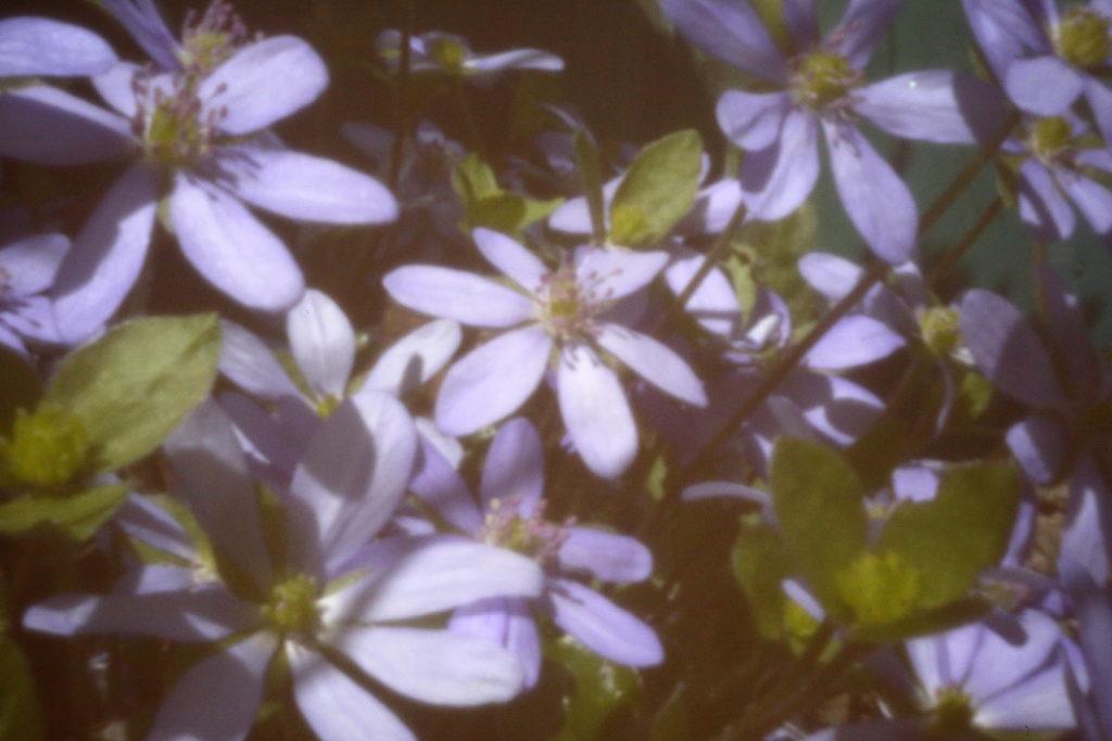 Fotografiert mit einer digitalen SLR, die zu einer Lochkamera umgebaut wurde.