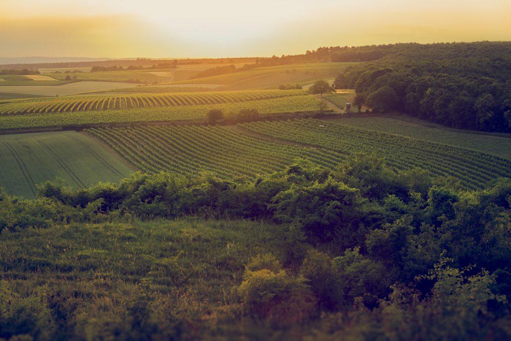 Traditionelles Weinanbaugebiet